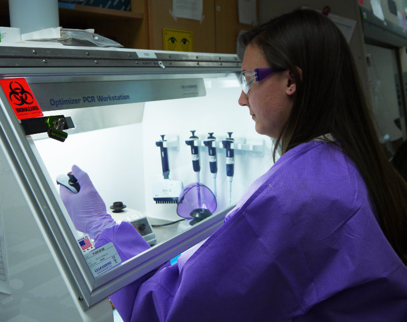 A female epidemiologist with a pipettor working at a lab workstation